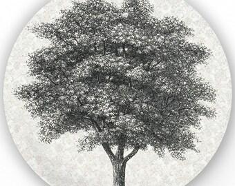 Tree I - vintage engraving plate