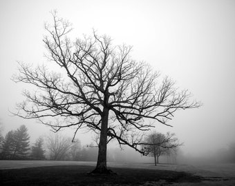 Tree in Fog Print, Art Print, Nature Photography, Neutral Wall Decor, Tree Art, Black and White Photography, Fine Art Photography Print