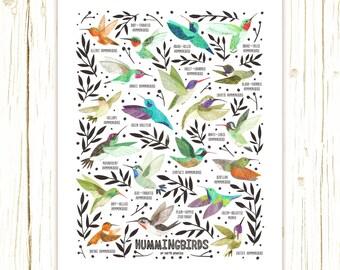 Hummingbirds Field Guide Art Print - classification chart