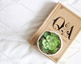 Styled Stock Photo   Succulent On Book   Blog stock photo, stock image, stock photography, blog photography