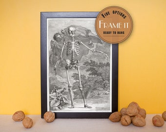 "Vintage illustration of a skeleton figure in landscape - framed fine art print, art of anatomy, 8""x10""; 11""x14"", FREE SHIPPING - 167"