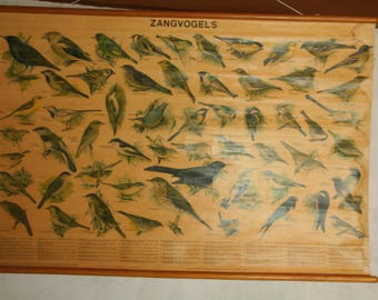 Vintage school pull  depicting song birds on linen by  W.J Theime