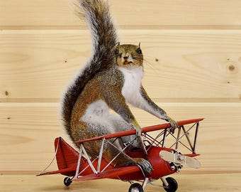 Red Baron Gray Squirrel Taxidermy Mount - SW4649 - Novelty Taxidermy Gift