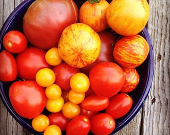 Heirloom Tomato, Seed Collection, Open Pollinated Tomato Seed, Heirloom Tomato Seed, Non GMO Vegetable Seed,  Vegetable Garden Seed