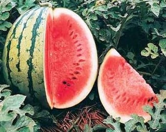 Crimson Sweet Heirloom Watermelon Seeds Non-GMO Naturally Grown Open Pollinated Gardening