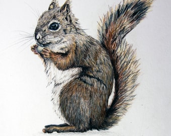 Red Squirrel - Original Colored Pencil Drawing Art
