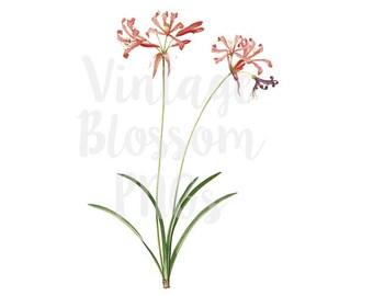 Flower Digital Download Botaniclas Clip Art for Invitations, scrapbook, Card making, collage, prints - 1274