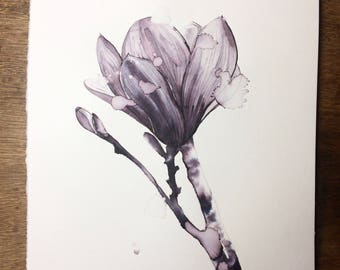 Magnolia (print)