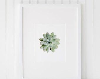Succulent Art, Printable Succulent, Plant Photography, Succulent Poster, Green Succulent Wall Art, Gallery Wall Printable, Art Printable
