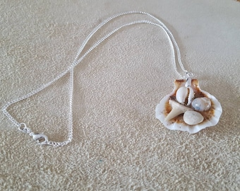 Shell necklace with shark tooth and other shells