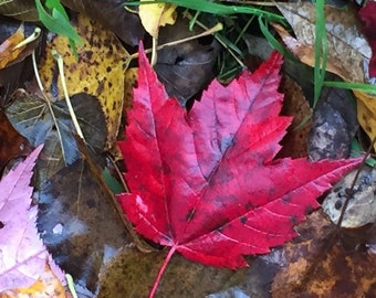 5 x 7 Framed Photo of Fall Leaf