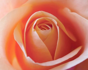 Peach Rose photo Digital Download Photography Rose wall art Printable rose