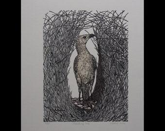 Linocut Australian Great Bowerbird