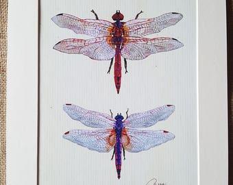 Dragonfly Wall Art Dragonfly Print Dragonfly Artwork Dragonfly Painting Dragonfly Illustration -Crimson Darter & Violet Dropwing pretty gift