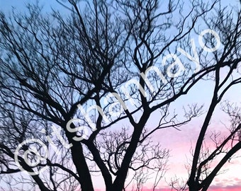 sky ombre tree