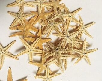 Mini Starfish Pack/90   (1-1 .5 inches)