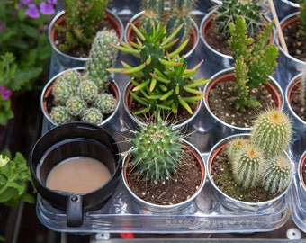 Cacti and Tea Print - Columbia Road Flower Market Photography - Cactus Art