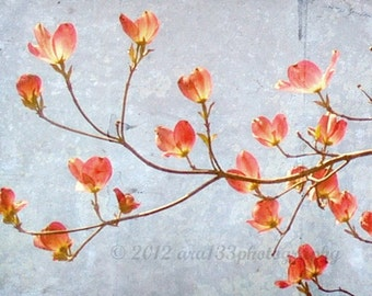 Floral Photography Large Wall Art - Pink Blue Flowering Branch Dogwood Traditional Spring - 20x20 inch Fine Art Photography Print - Flourish