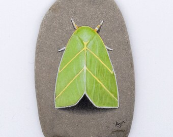 Painted Pebble - Scarce Silver-lines Moth
