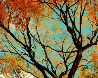 Cheerful Autumn - Foliage - Autumn Tree Photograph - Nature Art - Wall Decor - New York Autumn Tree  - Autumn Tree Art - Nature Photograph