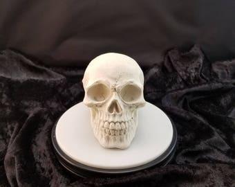 White concrete skull