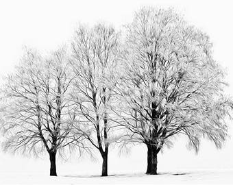 three bare winter trees trio simple minimalist monochrome black & white mounted photographic wall fine art photography photograph print