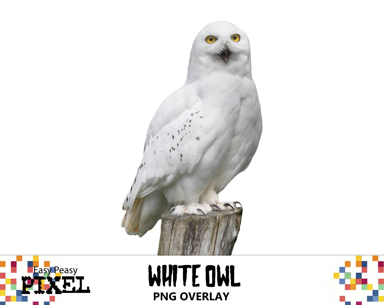 White Owl Digital Overlay