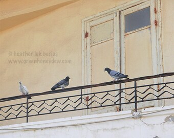Birds on Balcony Photography - Wildlife - Fine Art Photography - Rustic European Beautiful Neutral