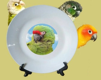 "Military Macaw Bird Blue Sky Clouds White Decorative Ceramic 8"" Plate and Display Stand"