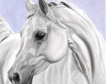 White Arabian Horse Art Digital Download - Instant Download