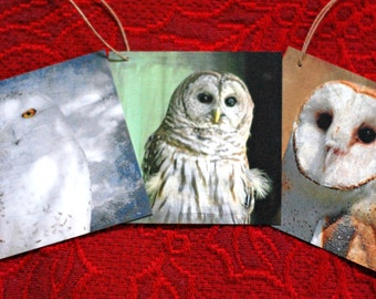 Owl Gift Tags, Set of 9, with Original Art Photos, for Holidays and Other Occassions