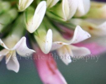 Pink and White Fine Art Print Clover Flower Wall Art Flower Photography Wall Decor Unframed Photo Print Framed Photograph Canvas Print