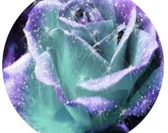 1000Pcs A Set Mint And Purple Rose Seeds  prodgf hidgf whydgf kaolal weibog kfsee ngryise dwarfgiantfarm