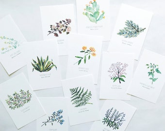 North American Plant 4x6 Postcard Pack (12 plants)