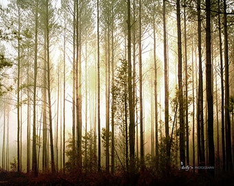Tree Photography- Glowing Forest Print, Tall Pines Photo, Mysterious Mist, Foggy Light, Brown Gold Black, Arboreal Art, Nature Photography,