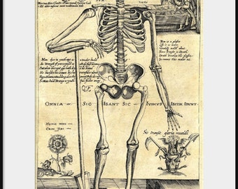 1620 HUMAN SKELETON Leaning on Spade Giclee Print Poster Antique Morbid Macabre Grotesque Anatomical Autopsy Art Drawing Illustration P192
