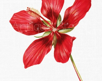 Hibiscus Flower Clip Art 'Scarlet Rosemallow' Digital Download Illustration for Prints, Scrapbooking, Collages, Invitations, Card Making...