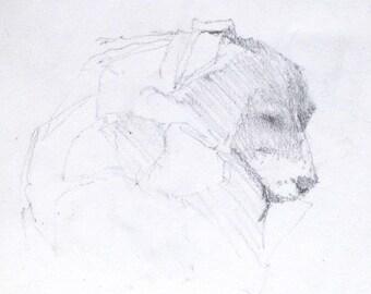 Original Pencil Drawing - Custom Portrait of your Pet
