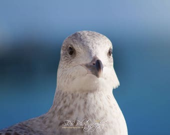 The Seagull Photographic Print