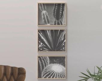 Cactus Art Printables Prints - Succulent Home Decor Cacti Black and White Photography Photos