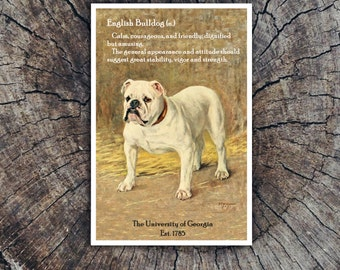 Georgia Bulldog // Postcard