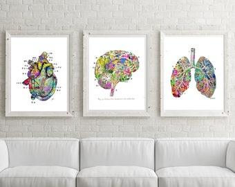 Lung Brain Heart PRINTABLE Watercolor Medical Art Printable Doctor Gift,Heart Print,Brain Art,Medical Wall Art Medical,Brian Art-Anatomy Art