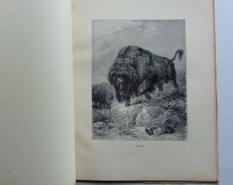 1890's Animate Creation