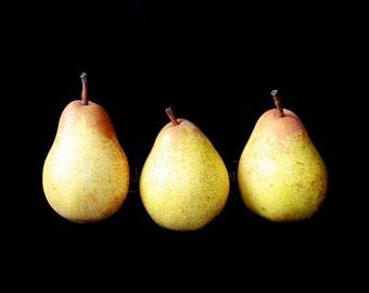 Still Life Fruit Photography - Three Pears Fine Art Photograph - Fruit Print - Pear Art - Kitchen Decor