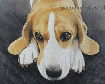 It wasn't me!' Beagle study Greetings card