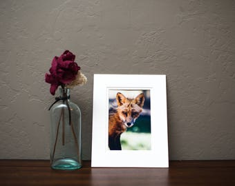 Photographic Fox Print, Matted