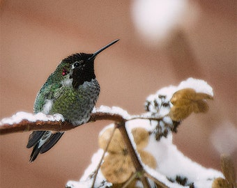 Hummingbird Image, Nature Photo, Bird Photo 5x7 to 11x14,