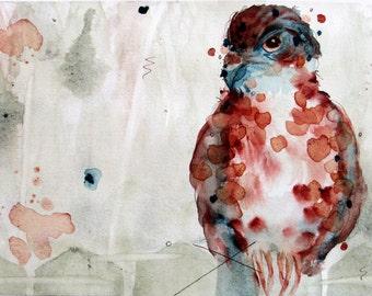 Large Archival Art Print of Watercolor Hawk, Bird of Prey, Nature, Wildlife, Bird Art, 12 x 16 Print