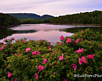 Acadian National Park Photograph, Travel Photography, Nature Photography, Color Photography, Landscape Photography, Prints, Free Shipping