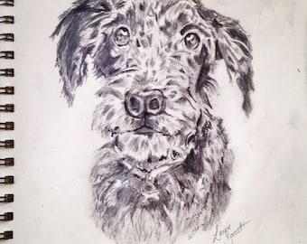 Personalised Pet / Animal Drawings